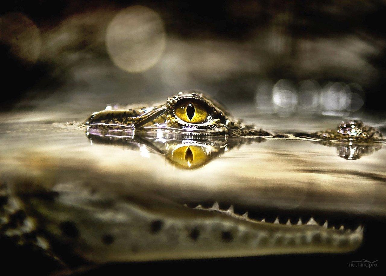 Инструкция Alligator 990