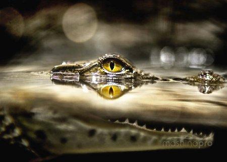 Охранная система премиум класса Alligator